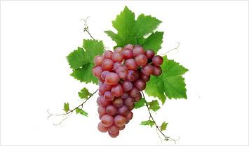 Uva da tavola eon srl - Red globe uva da tavola ...